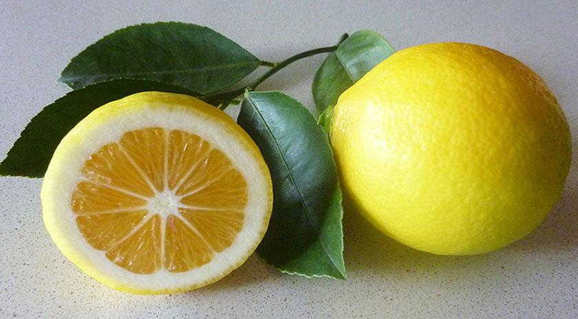 Как выглядит лимона